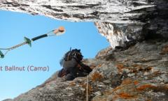 Ballnut (Camp)