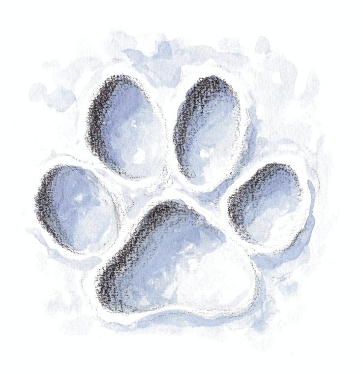empreintes de loup dans la neige